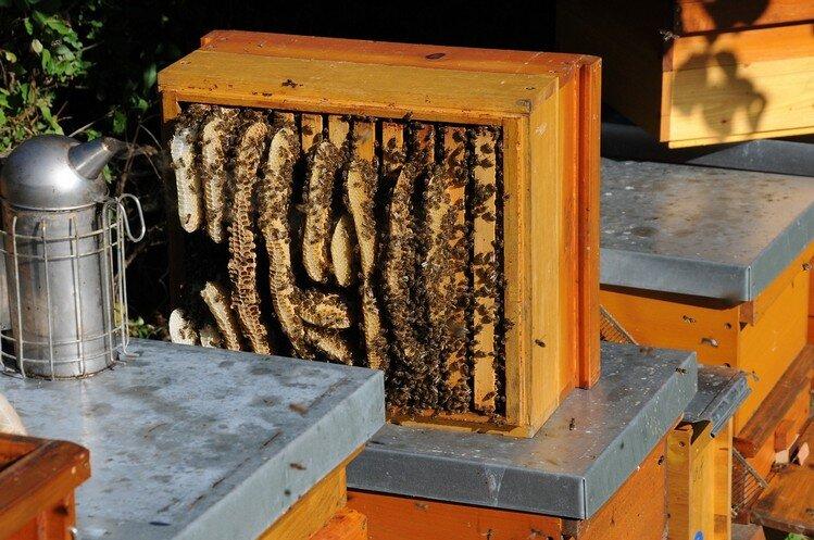 abejas La salud esta en tu hbitat Stop contaminacin